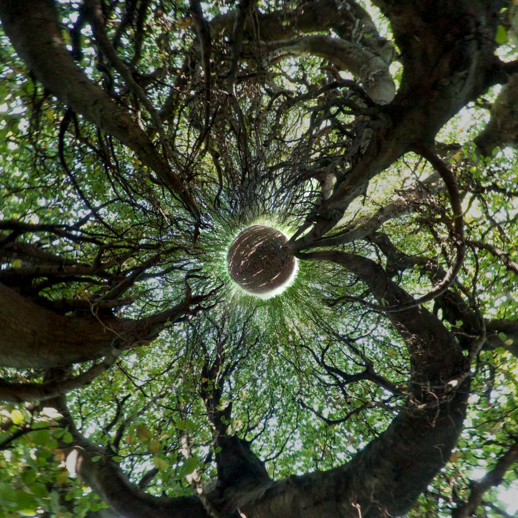 Mini planete arbre mistral